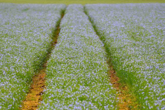 Květinová cesta